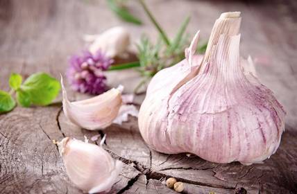 Garlic fights as painkiller for toothache